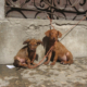 ANIMAL PROTECTION IN CUBA: AN URGENT NEED