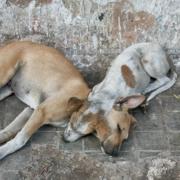 ¿POR QUÉ EN CUBA NO EXISTE UNA LEY DE PROTECCIÓN ANIMAL?