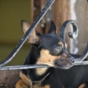 Denuncian a hombre por supuestamente sodomizar y torturar mascotas en La Habana