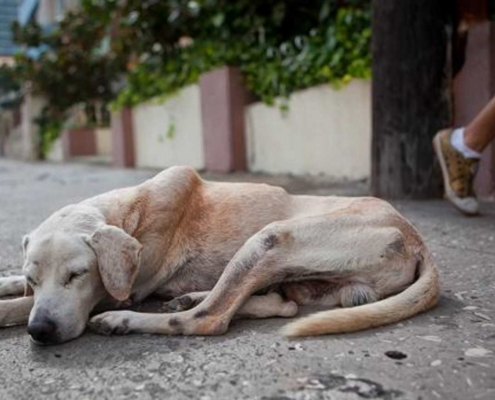 When you visit Cuba, you can help animal welfare groups