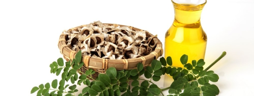 Cuba elabora productos cosméticos a base de aceite de la semilla de moringa