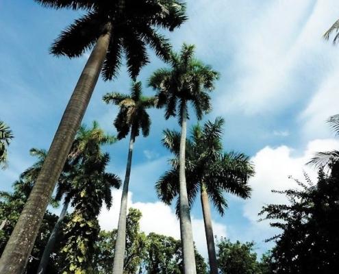 Le poumon vert de La Havane