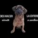 proyecto Cubanos en Defensa de los Animales