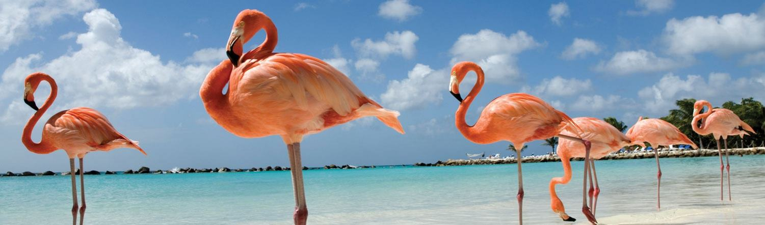 Explore Cuba's Unique And Fascinating Wildlife On The Island Of Cayo Coco