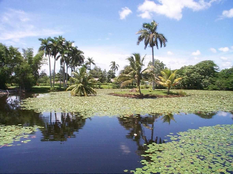 Ciénagas de Lanier y de Zapata: las más atractivas de Cuba