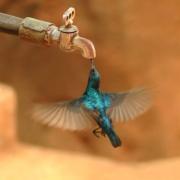 Empresa Aguas de La Habana informa sobre afectaciones