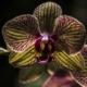 Jardín Quinta de los Molinos recibió singular Festival de las Orquídeas