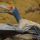Descubren en la provincia de Cienfuegos el primer fósil de pterosaurio registrado en Cuba