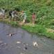 """Otro """"Trash Challenge"""" deja limpia buena parte del río Luyanó en La Habana"""