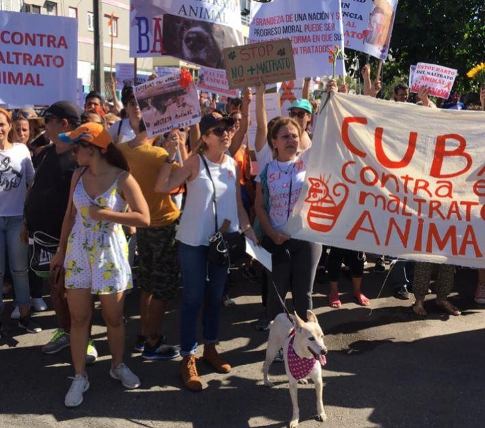 Cubanos marchan contra maltrato animal en manifestación permitida por Estado