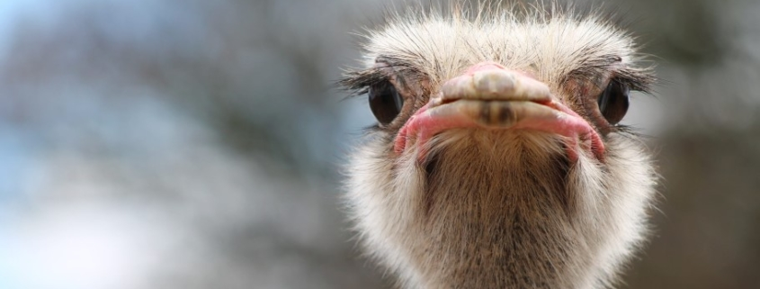 When Will Cubans Get to Eat Ostrich Meat?