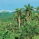 Cuba's Forest Area Increases