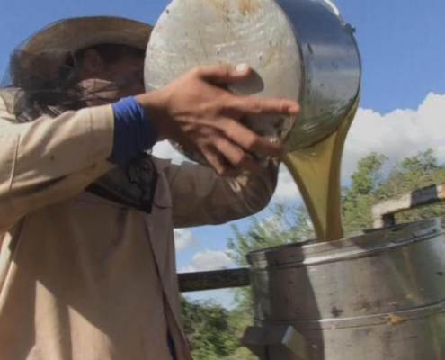 Harvesting honey becomes big business in Cuba