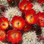Festival de Cactus en el Jardín Botánico de La Habana