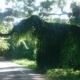 """El """"mamut"""" del Bosque de La Habana que ya no está"""