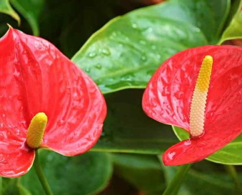 Jardín Botánico de La Habana abre sus puertas a nuevo festival