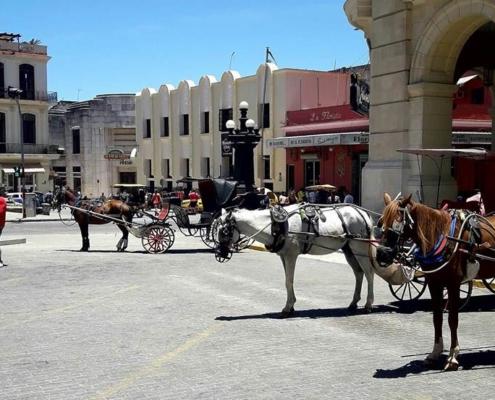 El maltrato a los caballos que tiran de los turismos en La Habana continúa