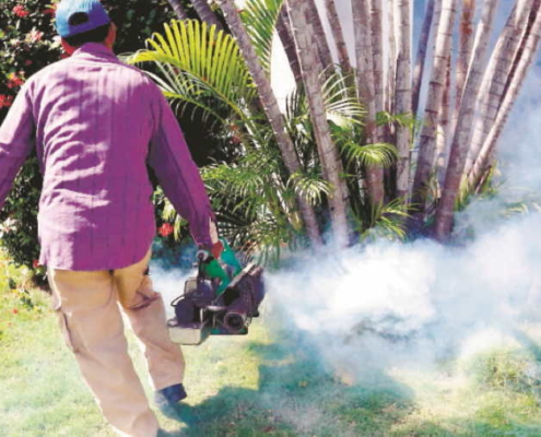 Cuba to Try New Ways to Fight Aedes Aegypti Mosquito
