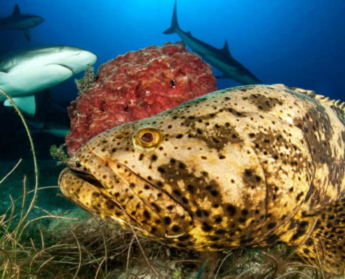Cuba drastically reforms fishing laws to protect coral reef, sharks and rays