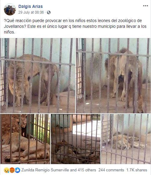 El deplorable estado de los leones en un zoológico de Matanzas