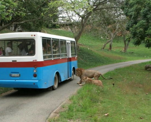 """Zoológico Nacional de Cuba reabrió sus puertas pero no ofertará los """"safaris"""""""