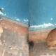 Ofrecen en adopción a perra callejera para evitar que la echen a pelear en La Habana