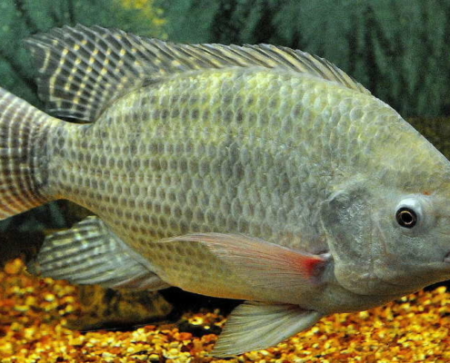 Cuba seeks investors in aquaculture