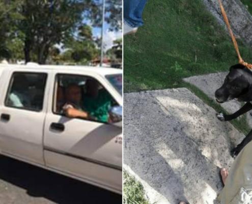 Denuncian sacrificio de perros callejeros recogidos por la visita de los Reyes de España