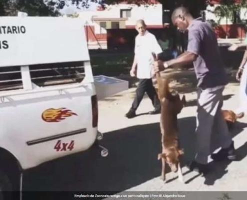 Cubanos denuncian la matanza de perros callejeros en La Habana
