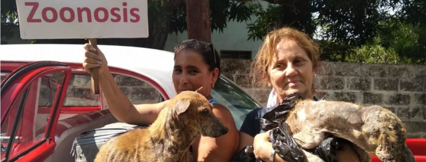 Cubans manage to free dogs captured by Zoonosis in Havana