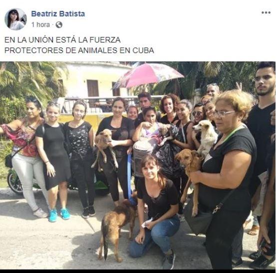 Les Cubains parviennent à libérer les chiens capturés par Zoonosis à La Havane