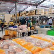 First Vietnamese factory inaugurated in Cuba