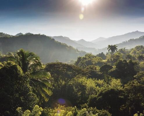 Dans les montagnes de Cuba, l'autre pays du café