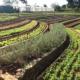 Finca Marta, un grand projet d'agriculture écologique
