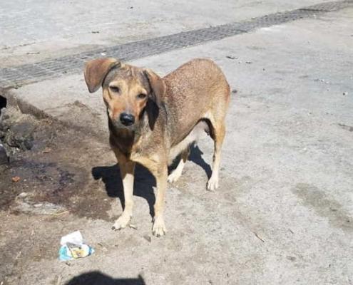 En peligro pareja de perros y cachorros reportados a Zoonosis