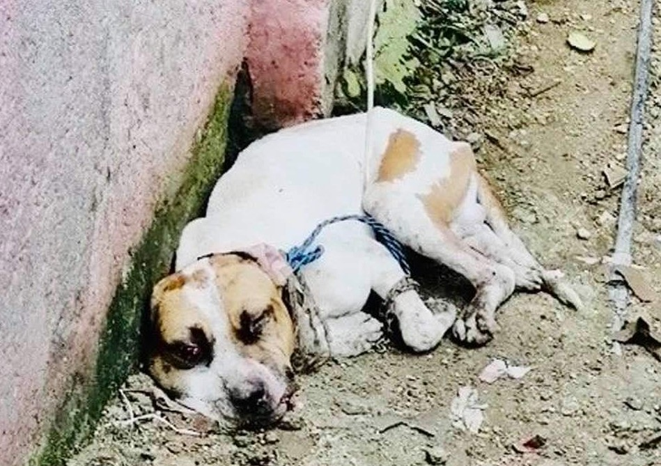 Sin carteles, sin consignas: convocan una nueva 'protesta' contra el maltrato animal