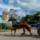 Oxen and horses put back to work in Cuba