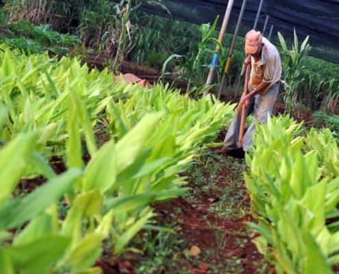 Cultivar la tierra en el corazón de La Habana