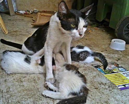 Denuncian recogida de gatos e incumplimiento de acuerdos por parte de Zoonosis