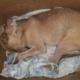 """Rescatan a un cachorro apaleado y """"tirado como basura"""" en La Habana"""
