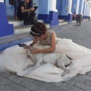 Cubanos caen rendidos con las fotos de una quinceañera junto a un perro callejero