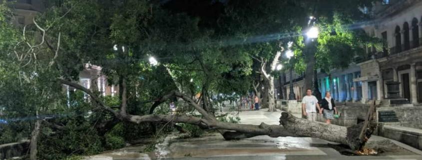 Cae un árbol en medio del Paseo del Prado en La Habana