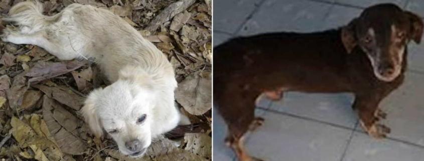 Piden ayuda para encontrar a los dueños de perros abandonados en La Habana