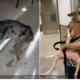 Perra callejera llega a Miami adoptada por una periodista norteamericana