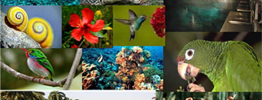 Los primeros resultados en la gestión de la biodiversidad de Cuba