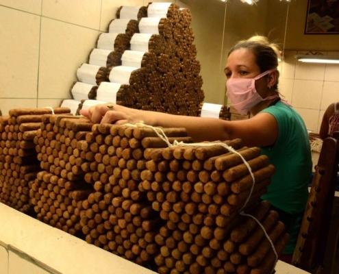 Comercializan tabaco de extrema calidad en provincia de Cienfuegos