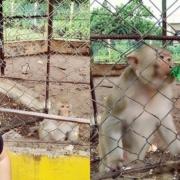 Cubana rompe a llorar en el zoo de Trinidad