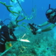 With pristine reefs at stake, Cuba bets on coral nurseries