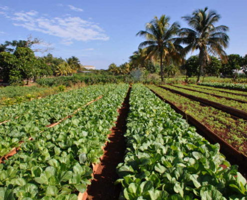 Cuba's organic farms flourish amid pandemic's potential impact on food supply