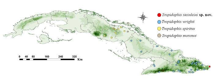Una nueva especie de serpiente para Cuba fue hallada en Punta de Maisí